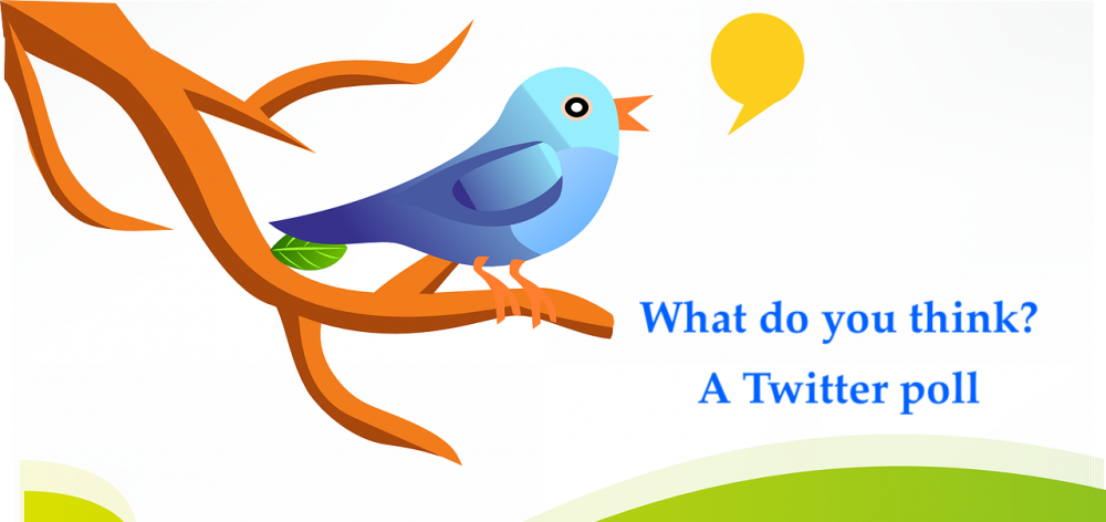 twitter poll Image by OpenClipart-Vectors from Pixabay copy