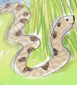 shelley dieteriches snake